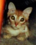 kitten - hiding
