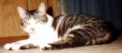 kitty - 2