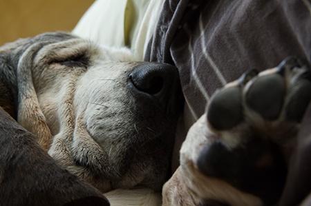 Sleepy girl with paw