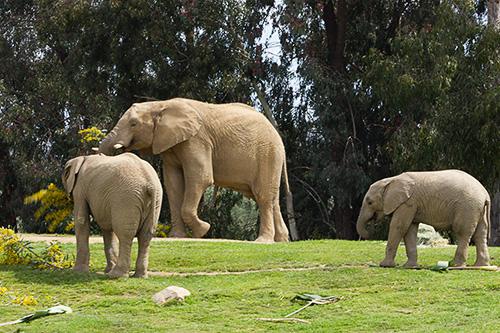 group of elephants enjoying yellow flowers