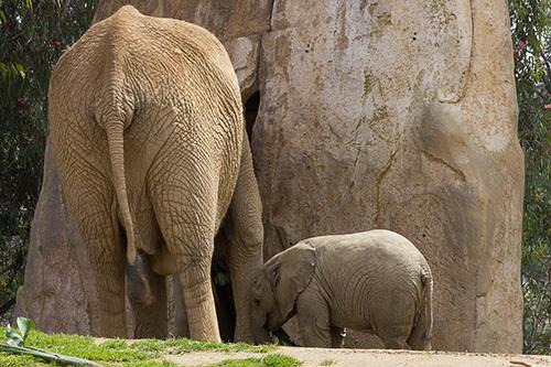 Mom & baby elephants