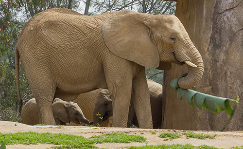 Mom, baby, & friend elephants