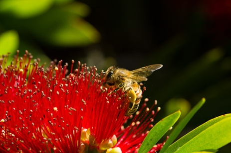 bee on red flower