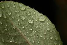 water drops leaf