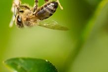 bee on white flower bush